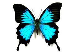 Cómo hacer decoraciones de mariposas para un baby shower | eHow en Español