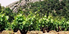 """La grande diversité du Gigondas par """"l'avis du vin"""" (http://avis-vin.lefigaro.fr/connaitre-deguster/o30260-appellation-la-grande-diversite-du-gigondas)"""