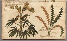 Digitized Rare Books — Dumbarton Oaks Hand Printed Fabric, Fabric Wallpaper, Ferns, Rattan, Britain, Prints, Books, Design, Wicker