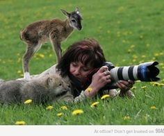 photograper and baby animals in a field - Google Search