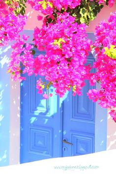 Bougainvillea and blue door in Santorini island, Cyclades, Greece Beautiful World, Beautiful Places, Jolie Photo, Greece Travel, Greek Islands, Oh The Places You'll Go, Windows And Doors, Wonders Of The World, Beautiful Flowers