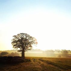 A beautiful start to the day. Repost courtesy of Fair Oaks, Rural Retreats, Country Estate, East Sussex, Oak Tree, Corporate Events, Country Living, Bliss, Sunrise