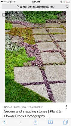 Sedum succulent plants between stone stepping stones in garden path, with lawn, ground cover plants and herbs Garden Shop, Dream Garden, Lawn And Garden, Garden Path, Water Garden, Planting Succulents, Planting Flowers, Succulent Plants, Unique Gardens