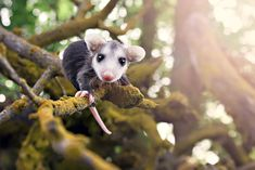 cute-possums-231__700