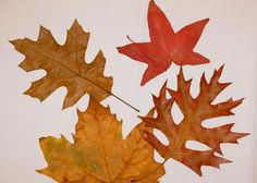 Autumn Leaf Placemat