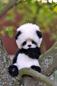 Omg a puppy in a panda costume! Adorable