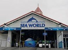 Image result for seaworld gold coast