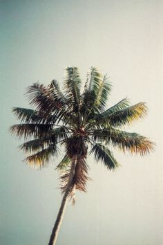 Urban Outfitters - Blog - Photo Diary: Palm Trees