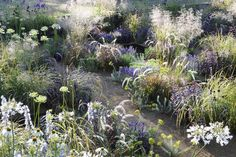 Inspired by the Roman Baths, a grid of reflecting pools set in meadow planting (with a raised walkway on 2 sides) | Alexandra Noble, Hampton Court Palace Flower Show 2014