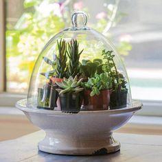 Pedestal Base Terrarium With Glass Top ==