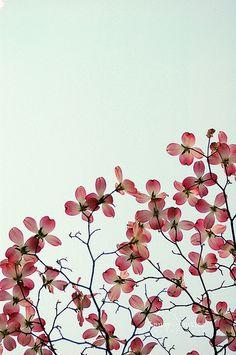 pretty blossoms