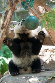 Mr. Wu plays tether ball