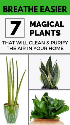 Breathe easier! 7 magical plants that will clean and purify the air in your home.