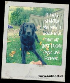 Forever love and loyalty!  #qotd #dogs #labradors #bff #pets #family