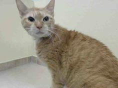 TO BE DESTROYED 12/20/13 Brooklyn Center **PROBABLE CANCER** SWEET SENIOR JENNY NEEDS A MIRACLE!!! My name is JENNY. My Animal ID # is A0987531. I am a female orange domestic sh mix. The shelter thinks I am about 10 YEARS old. I came in the shelter as a STRAY on 12/16/2013 from NY 11234, owner surrender reason stated was STRAY https://www.facebook.com/photo.php?fbid=717265831618585&set=a.576546742357162.1073741827.155925874419253&type=1&relevant_count=1