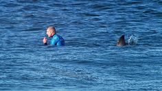 What should you do if a shark attacks you? A) Fight it? B) Play dead? C) Swim away? | Environment | The Guardian