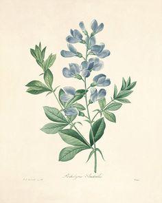 19 Botanical Dissection Ideas Botanical Botanical Illustration Botanical Art