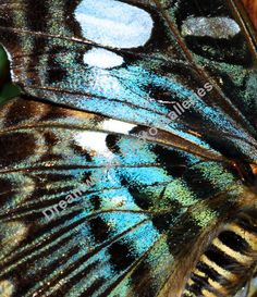 Butterfly wings, close-up