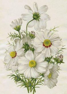 белые цветы - Схемы вышивки - lenaknigolub - Авторы - Портал «Вышивка крестом»