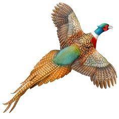 Flying Ringneck Pheasant tattoo