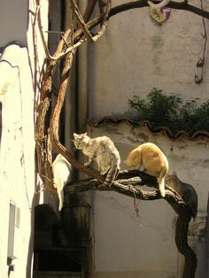 ღღ Cats in Ravello, Italy