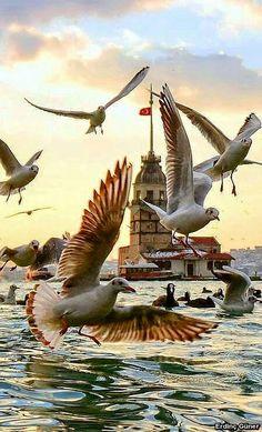 10 erstaunliche Fotos von Istanbul – baskı sanatı – Join the world of pin Beautiful Birds, Beautiful World, Beautiful Places, Turkey Travel, Belle Photo, Pet Birds, Wonders Of The World, Cool Photos, Amazing Photos