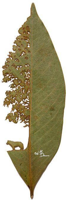 Lorenzo Manuel Durán Silva: el arte en las hojas