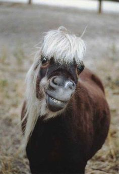 Funny animal pictures fresh from the net. Hand picked funny animal pictures of funny animals every hour. Horse Smiling, Smiling Animals, Happy Animals, Animals And Pets, Funny Animals, Cute Animals, Creepy Animals, Beautiful Horses, Animals Beautiful