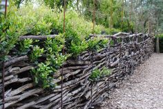 Rebar alternating with wood posts as uprights. I would use T-posts for a tall fence. Need Juniperus for weavers because this should be a permanent fence, given the work required. Great winter project. Inspiring Fences… | Harmony in the Garden