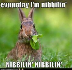 bunny nibbilin