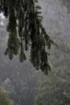 Smell the forest during a steady rain.dg