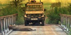 Kilimanjaro Climb, Wildlife Park, Tanzania, Safari, National Parks, Campaign, Rain, Content, Medium