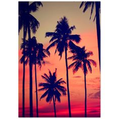 Palms & Sunset - 40x50 cm / 16x20″ / Poster only