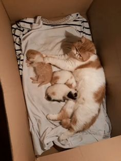 Mother Cat Is Taking Care Of The Children.,Funny, Funny Categories Fuunyy Mother Cat Is Taking Care Of The Children. Source by Jantoes. Funny Cute Cats, Cute Baby Cats, Cute Little Animals, Cute Cats And Kittens, Cute Funny Animals, I Love Cats, Kittens Cutest, Cute Dogs, Crazy Cats