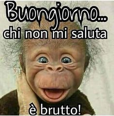 immagini divertenti buongiorno Book Cafe, Cute Dogs And Puppies, Funny Fails, Vignettes, Sensitive Skin, Memes, Good Morning, Growing Up, Google