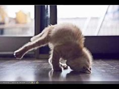 Animals Doing Funny Things