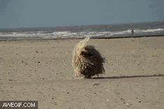 A wild mop has appeared