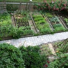 How To Garden Vegetables