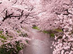 はるさんさんの作品「五条川の桜」(ID:4358613)のページです。撮影機材やExif情報も掲載しています。