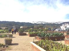 Mama and papa conehead touring the mustards grille garden. Napa valley California