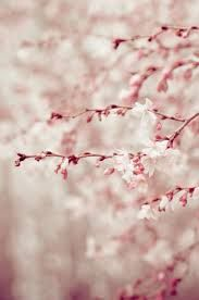 Image result for early blossom trees