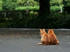 Corner of stray cats