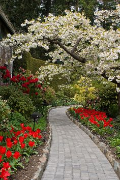 Butchart Gardens~ Victoria, British Columbia....Red and yellow with a dash of white to cool it.......