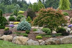Dwarf conifers, miniature conifers, Japanese maples and other exciting garden plants provide year-round excitement in the Jean Iseli Memoria...