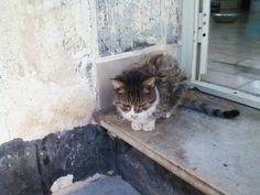 ciao tigrotta » Fbsocialpet.com: il social forum per cani, gatti, cavalli, tutti gli animali