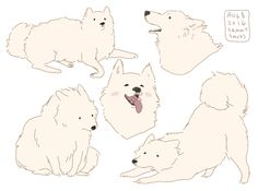 Image result for samoyed drawing