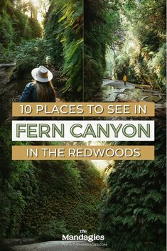 Fern Canyon Trail in the Redwood National Park is one of the best hikes in Northern California! We're sharing directions to Fern Canyon, what to expect, and how to pack for the most magical trip in the Redwoods! #california #northerncalifornia #redwoods. #redwoodsnationalpark #ferncanyon #pacificcoasthighway #sanfrancisco #coastlredwoods #roadtrip #forest #travel #USAtravel #usa #photography #sunset
