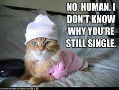 You Can Haz Memes? 31 Hilarious Cat Memes From Around The Internet (Slide - Pawsome Funny Cat Memes, Funny Cats, Funny Animals, Cute Animals, Hilarious, Funny Quotes, Cat Quotes, Dog Memes, It's Funny
