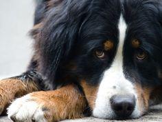 Hund einschläfern: Ein sanfter Tod des geliebten Tieres – Foto: Shutterstock / Pavel Pustina    www.einfachtierisch.de