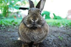 How to Keep Rabbits out of Your Garden Organically